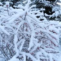 Krzewy otulone białym puchem