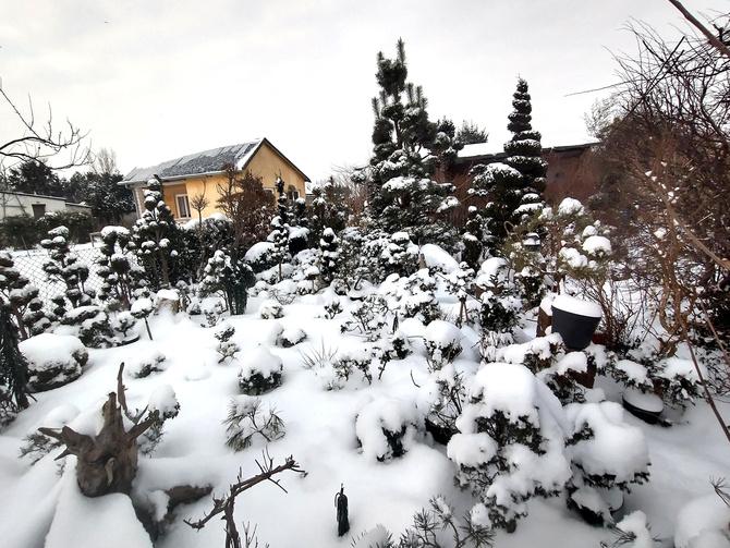 a w ogrodzie biało