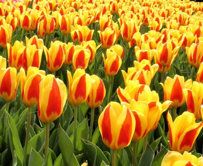 Do wiosny coraz bliżej