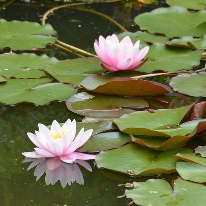 Dwubarwne kwiaty