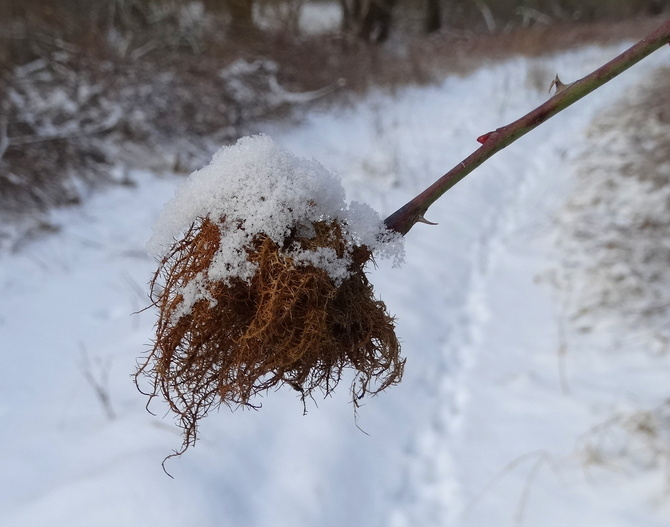 Ktoś stracił perukę :))))