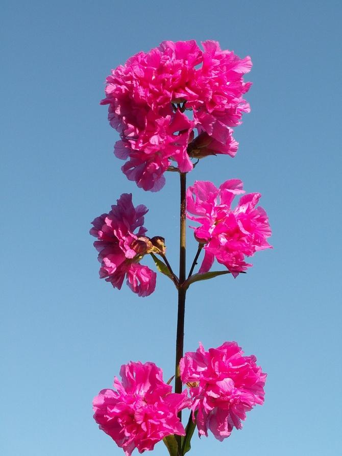 Kwiat w kolorze różowym