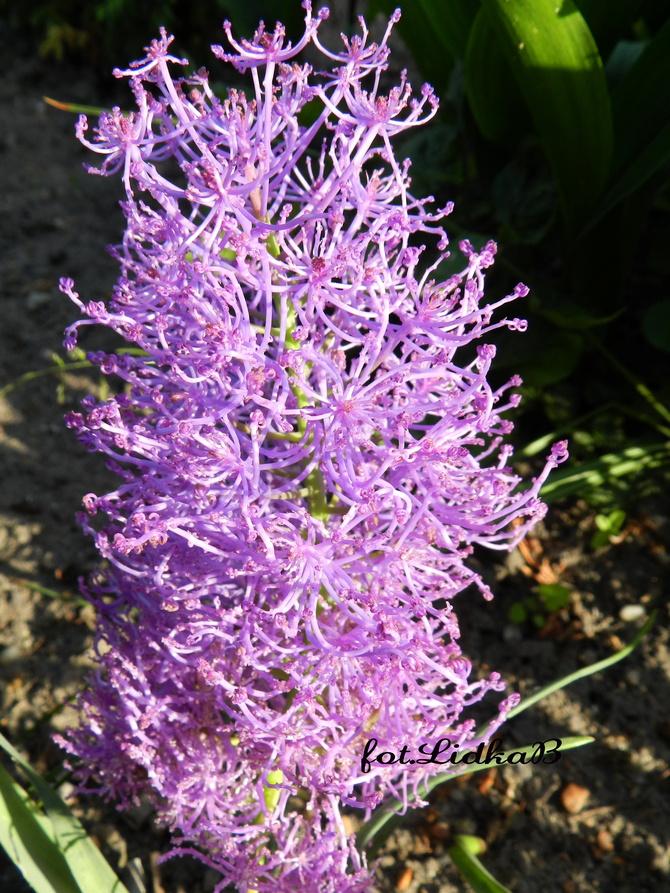 Kwiaty w kolorze fioletowym