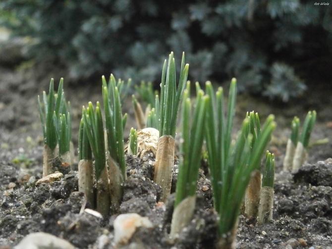 Mini wiosna...