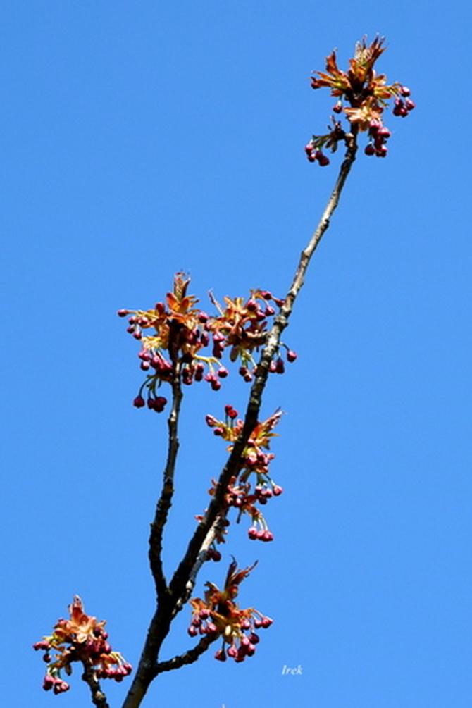 Niebo i wiosenna gałązka