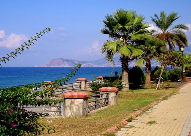 Palmy i błękitne niebo w Turcji.
