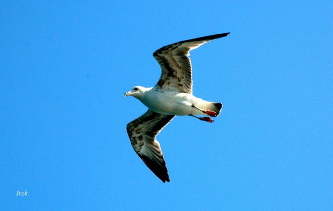 Ptak na tle błękitnego nieba.