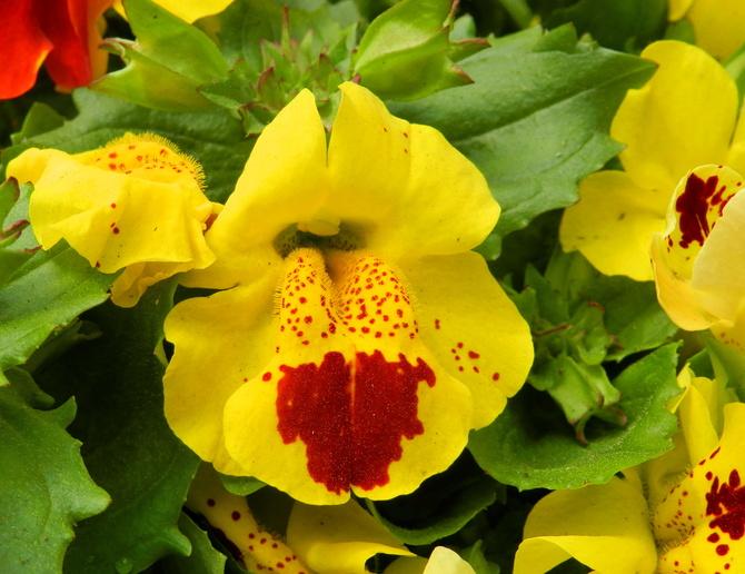 Słoneczny kwiatuszek