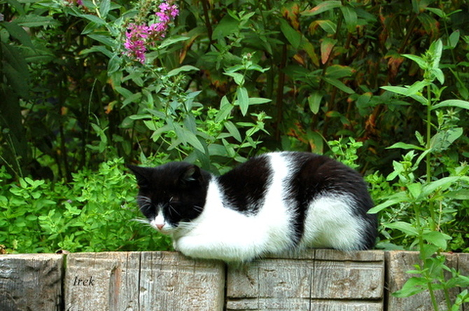 Sympatyczny kotek spotkany w ogr. botanicznym