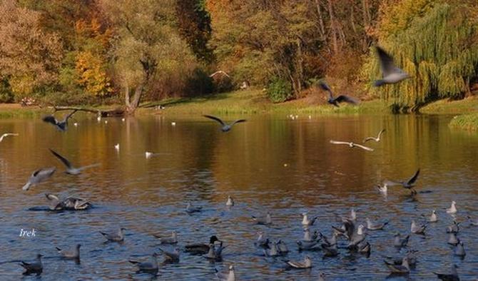 Tak było jesienią w parku w moim mieście.