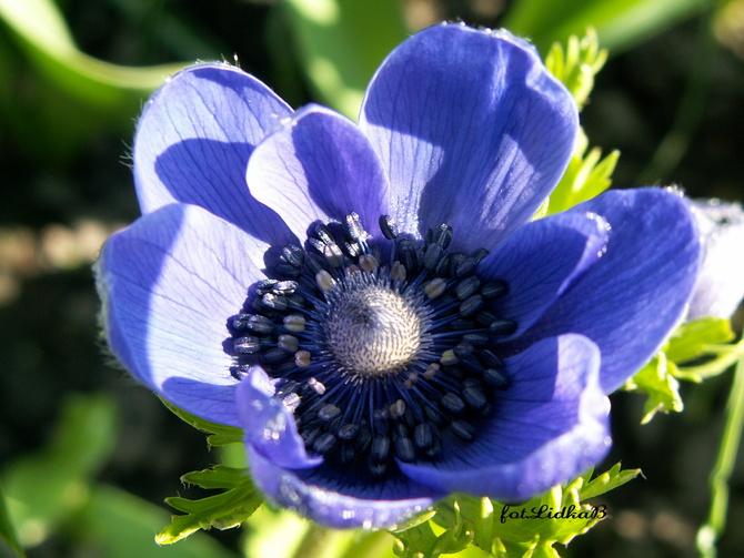 w błękitnym kolorze