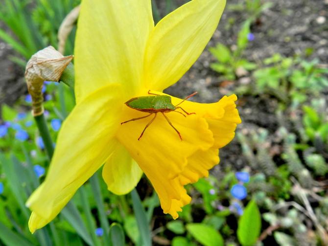 Wiosenny kwiat