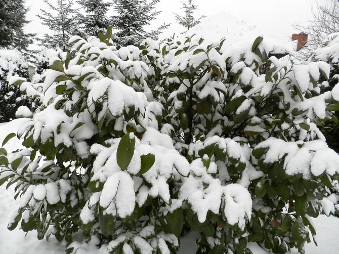 Zima, luty 2021
