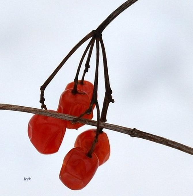 Zimowe owoce