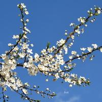 Dużo nieba i kwitnąca gałązka