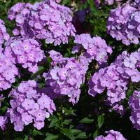 Kwiaty letnie