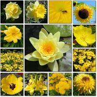 Kwiaty pełne słońca