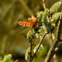 motyle również