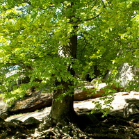 Soczysta zieleń liści