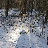 W lesie nadal śnieg...