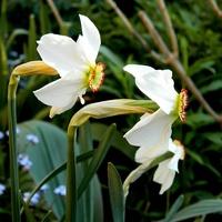 Wiosenne peryskopy;)