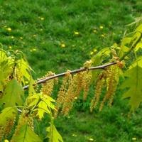 Wiosna na zdjęciu
