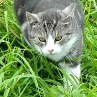 Wszystkie kotki mają swój dzień:)