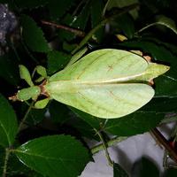 Zielony liść.....