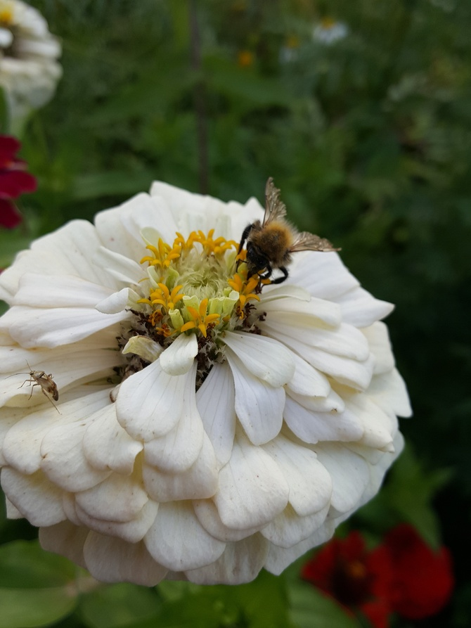 2 owady 1 kwiat...trijo
