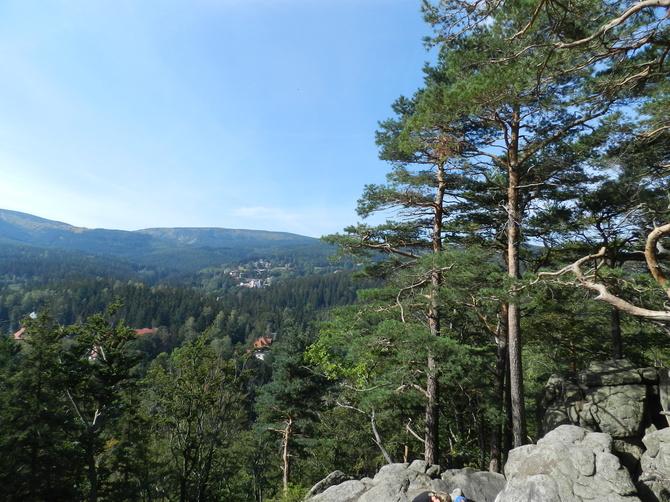 21 marca Międzynarodowy Dzień Lasów