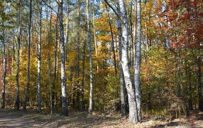 21 marca Światowy Dzień Lasu