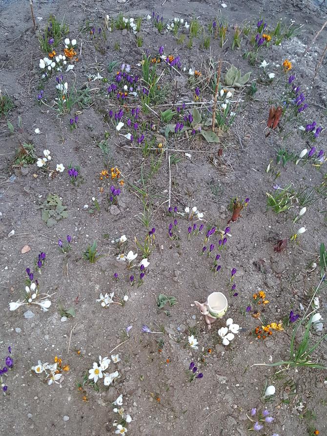 Białe kończą-fioletowe wychodzą