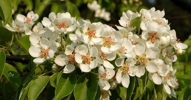 Gałązka wiosenna
