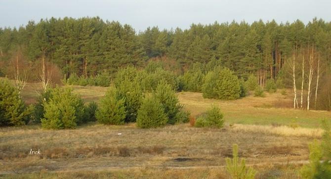 Jesienna polana na Mazowszu.