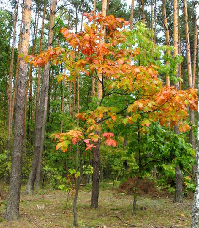 Kolorowa jesień w lesie