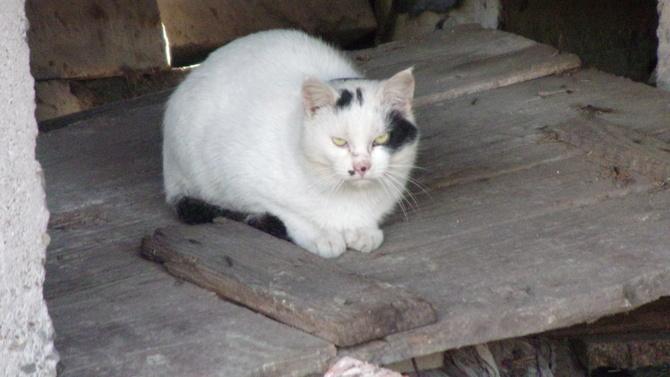 Kotu zimno choć na gościnnych występach.