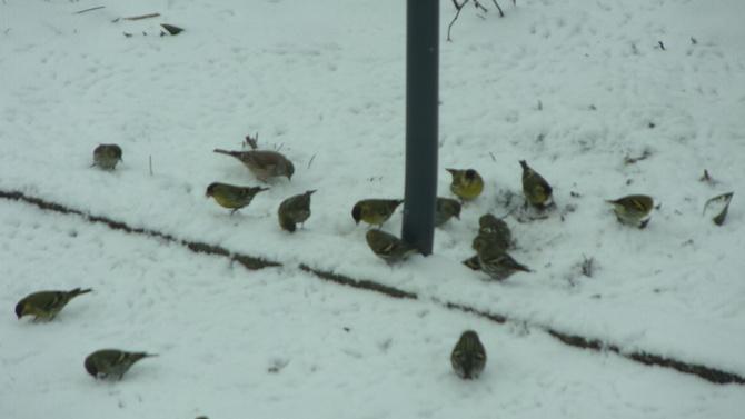 Lodowato, ptaszki głodne.
