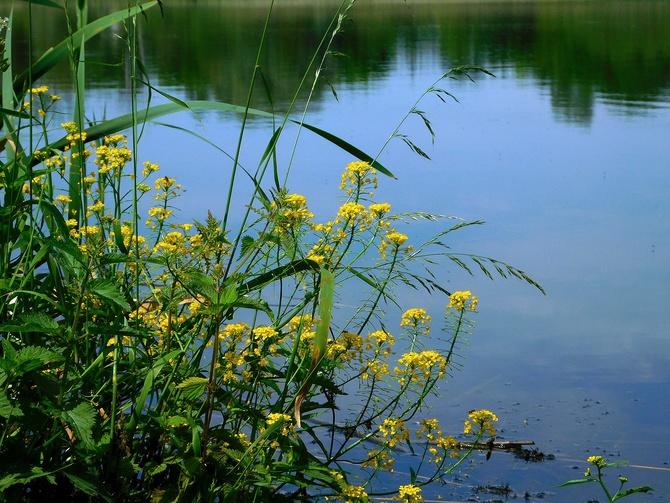nad wodą - lato