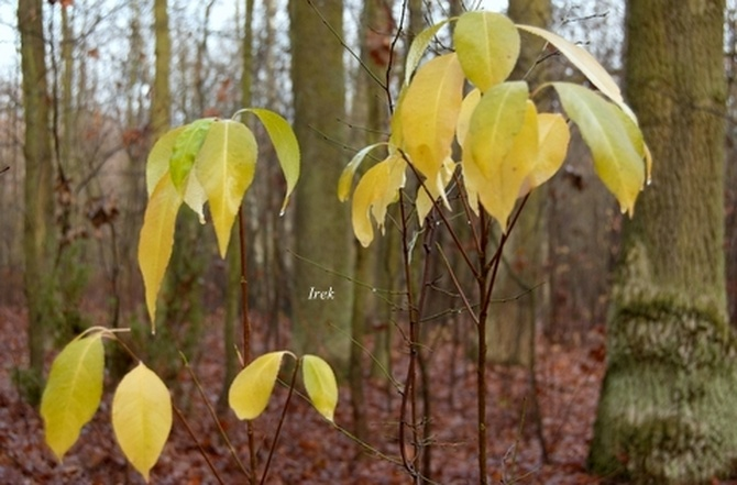Żółte liście jesienne