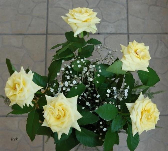 Róże żółte