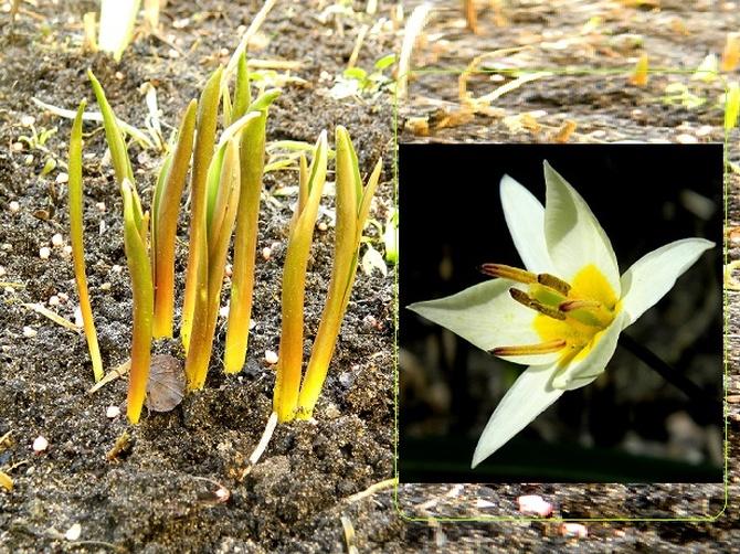 Rosną, a gdy urosną, zakwitną:)