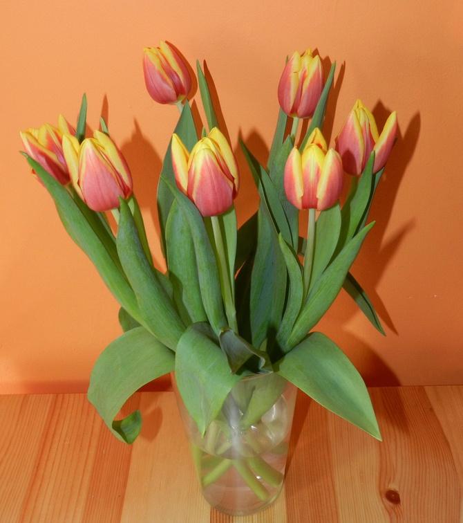 Tulipany, moje ulubione wiosenne kwiaty