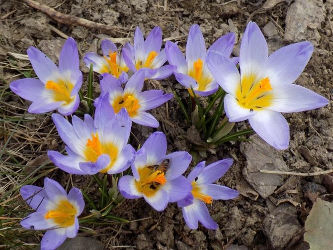 Uśmiech wiosny :)