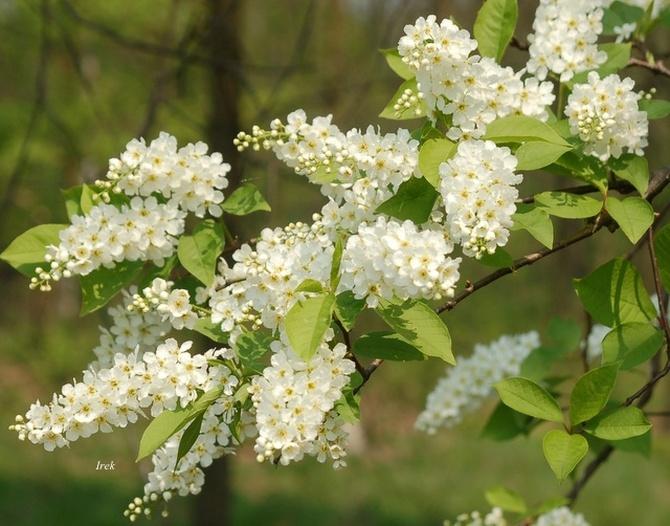 Wiosenna gałązka na brzegu lasu
