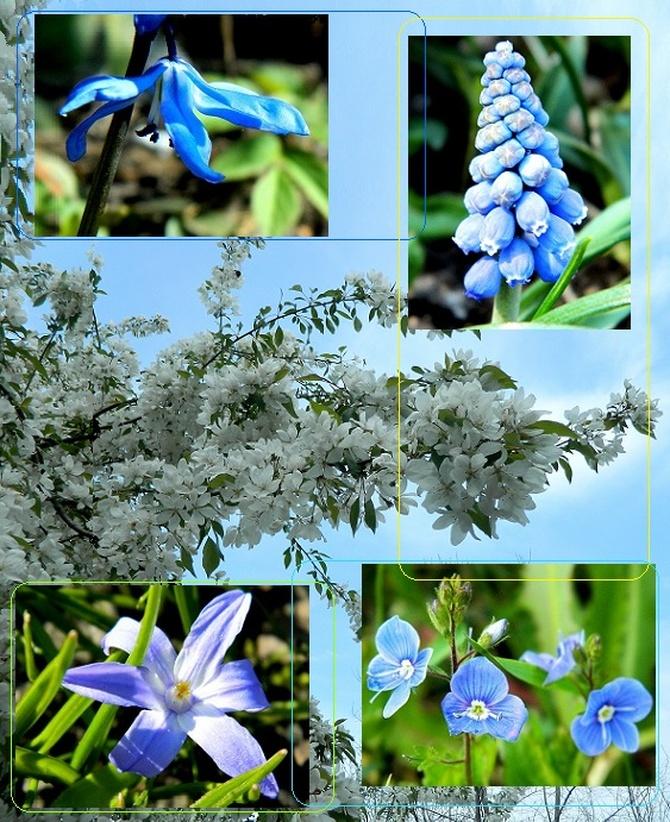 Wiosna, na razie tylko na fotkach