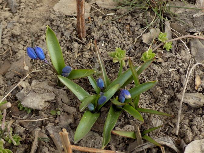 Wiosna się ociąga....