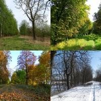 4 pory roku na mojej drodze do lasu