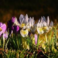 cztery oblicza wiosny