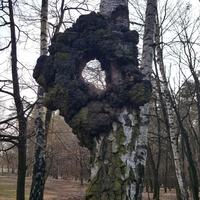 Drzewo jak drzewo...