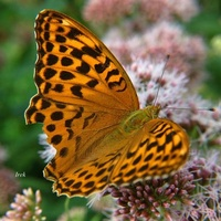 Głodny motyl